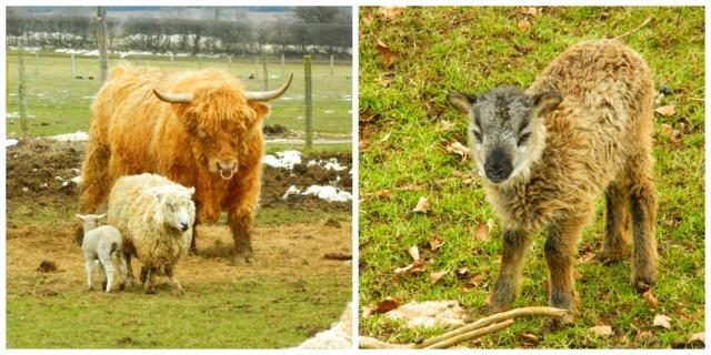 Animal farm collage2